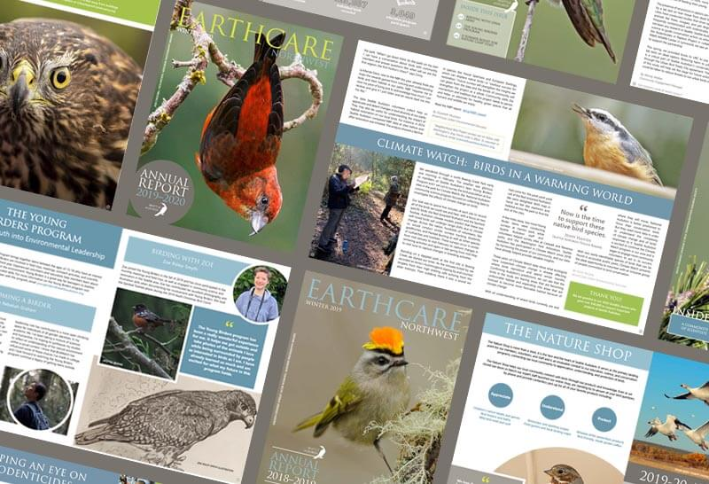 newsletters designed for a nonprofit