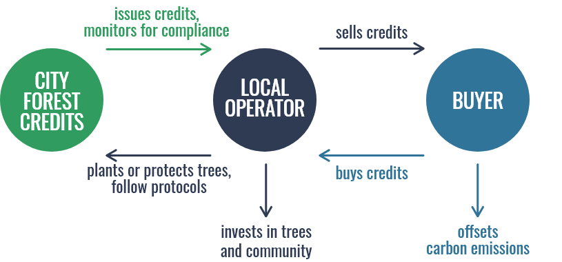 custom infographic for nonprofit